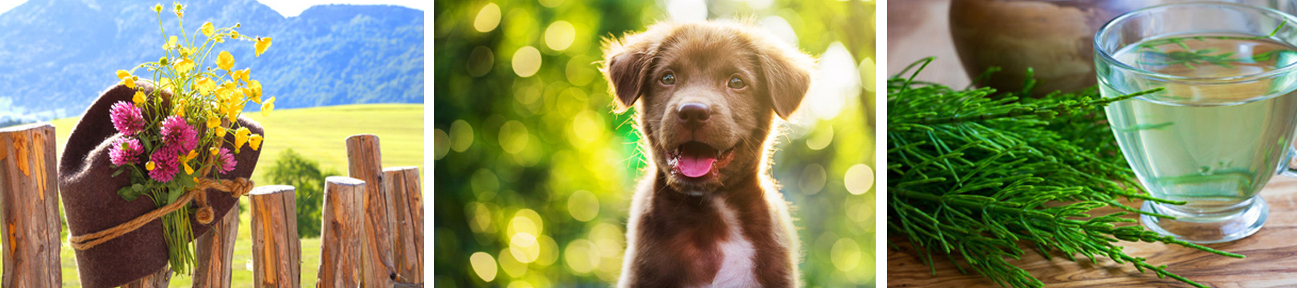 Hundeleckerlis & Hundesnacks